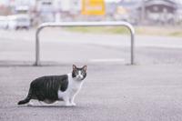 cat001